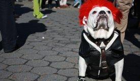 10 песен с участием лающих собак